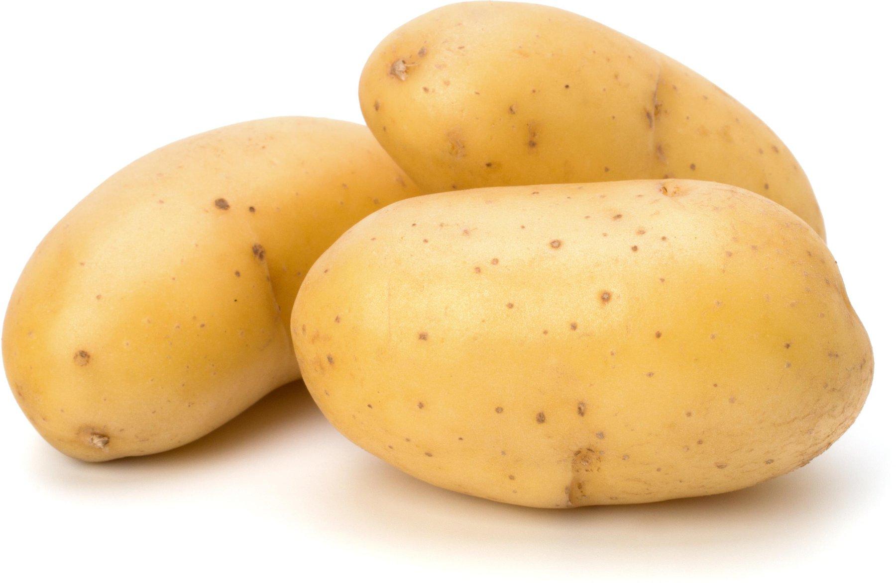 PFLANZKARTOFFEL SIEGLINDE 5 kg Pflanzkartoffeln zertifiziert Saatkartoffel früh